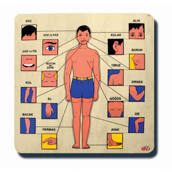 80015Vücudumuz 33x33cm Kulplu 20 parça Ahşap Puzzle