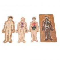 Katlı Vücut Puzzle